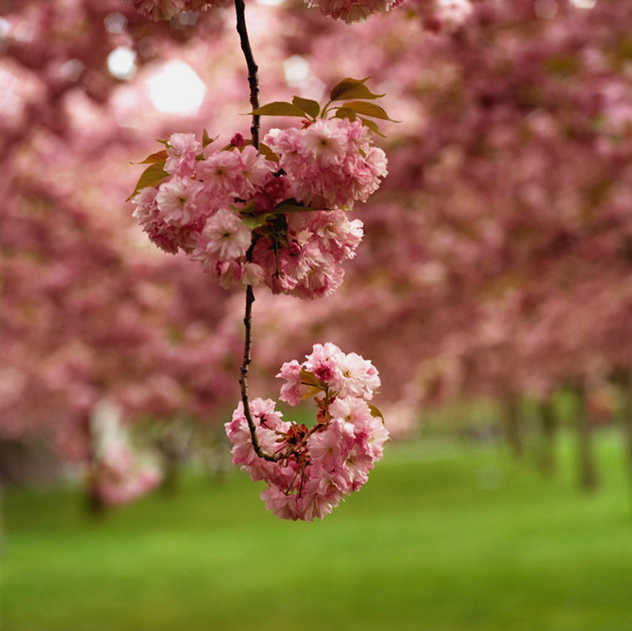 4.-Blossom-14