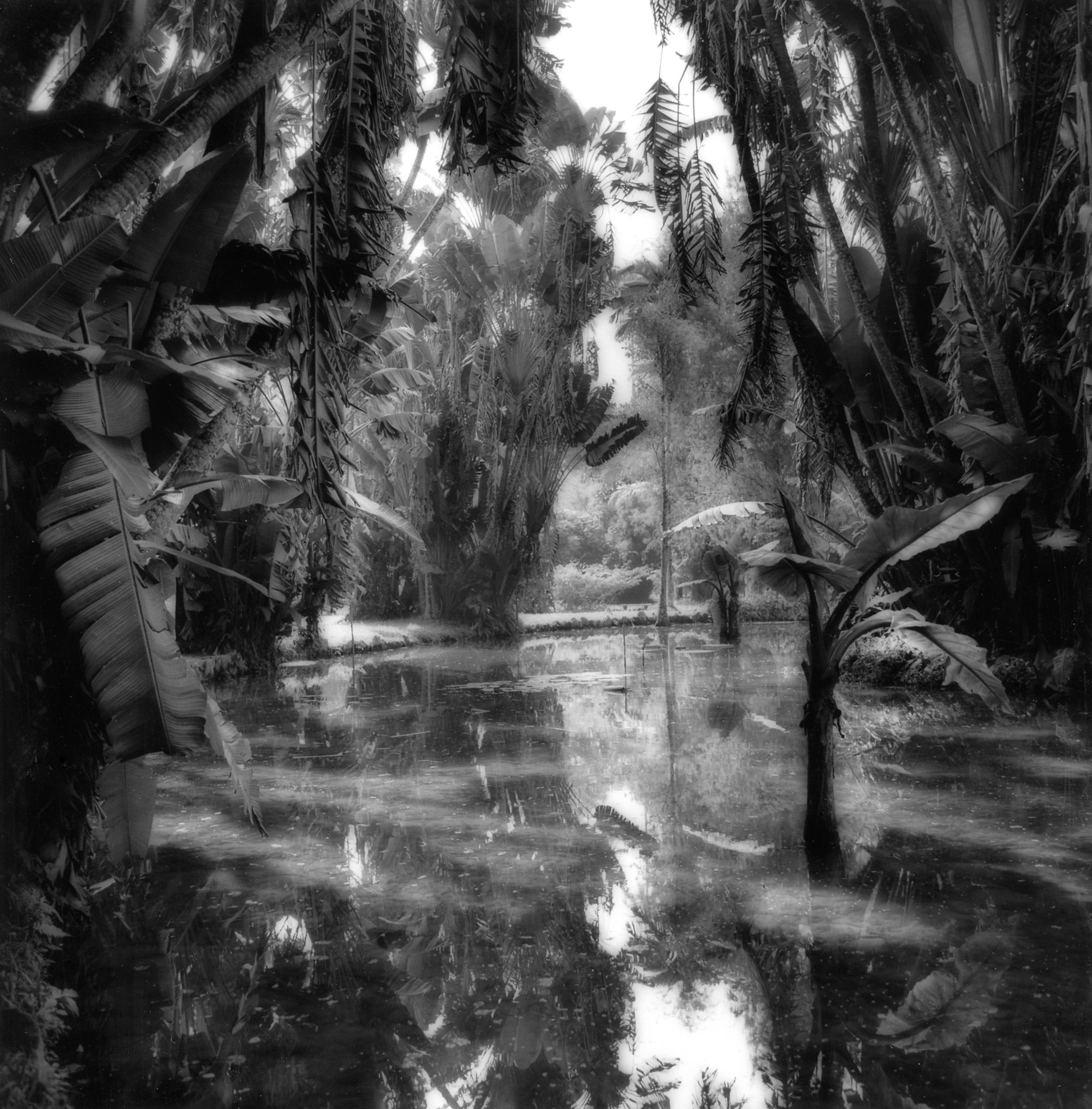 Rio-Botanical-Garden-1